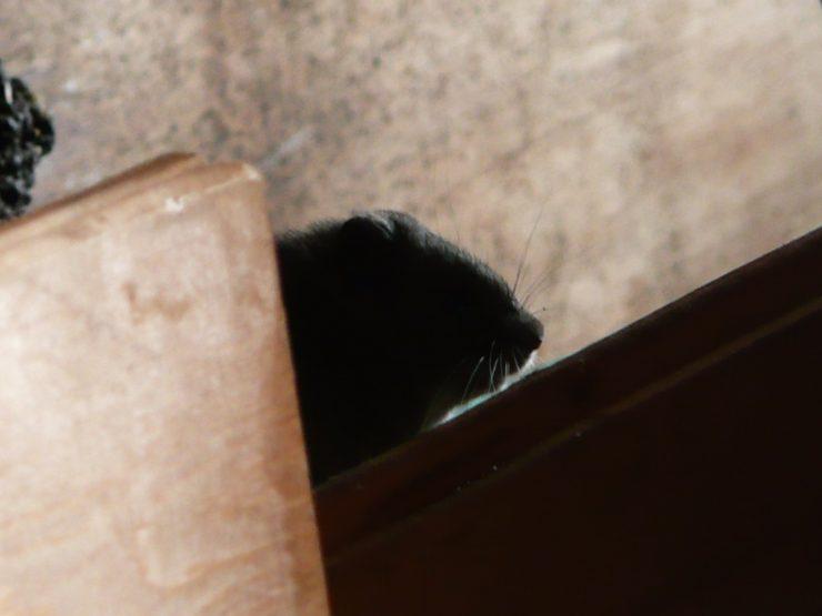 Mysz pod Elbrusem