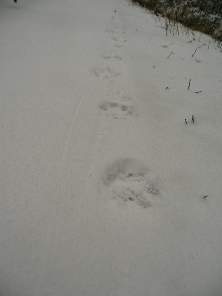 Tropy wilka alborysia