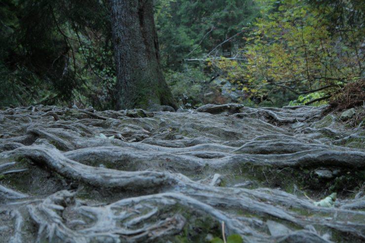 Szlak wdolinie potoku Bila Opava