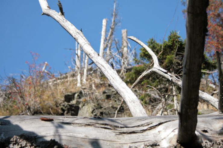 Wiatrołomy rezerwat Bila Opava