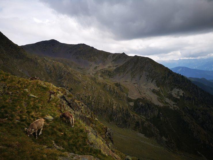 góry, krowy, brak szlaku