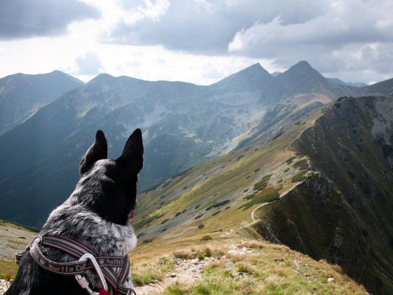 pies wgórach