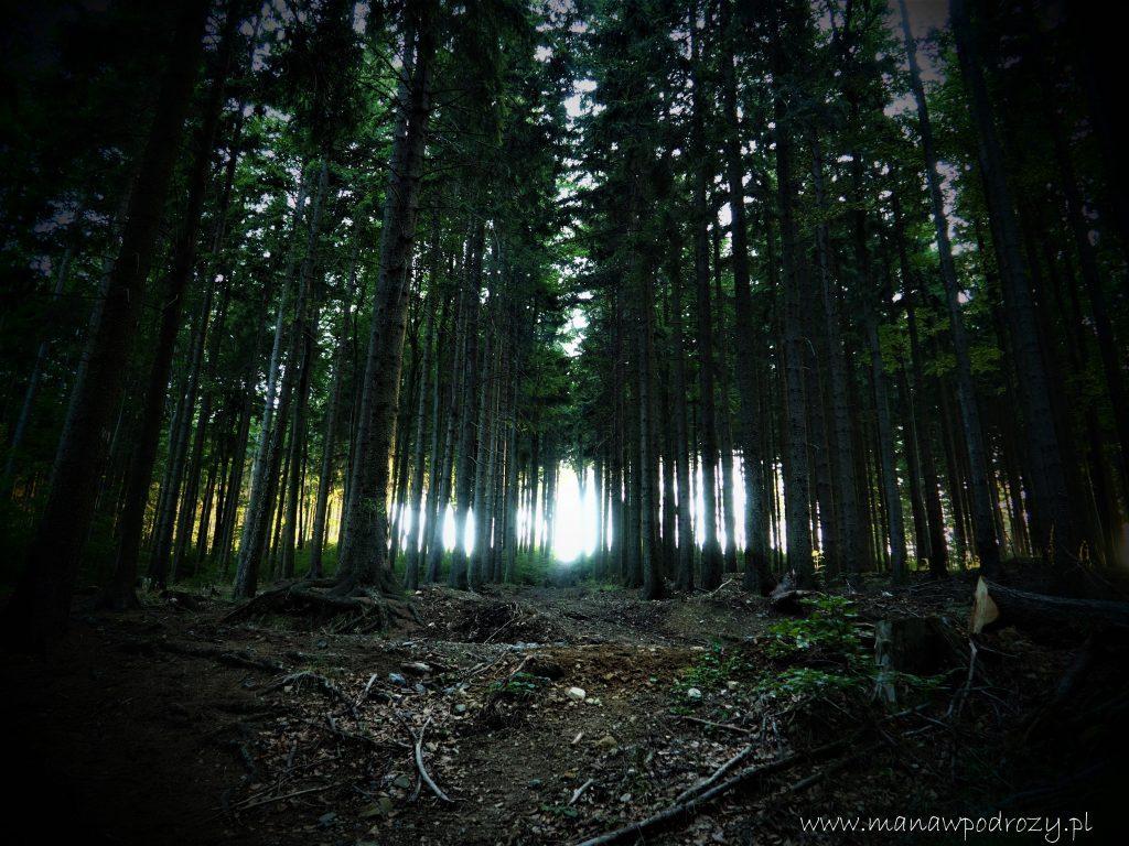Drzewa, las, słońce przebija się