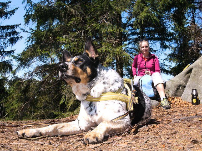 Jaki wziąć sprzęt dla psa wgóry?