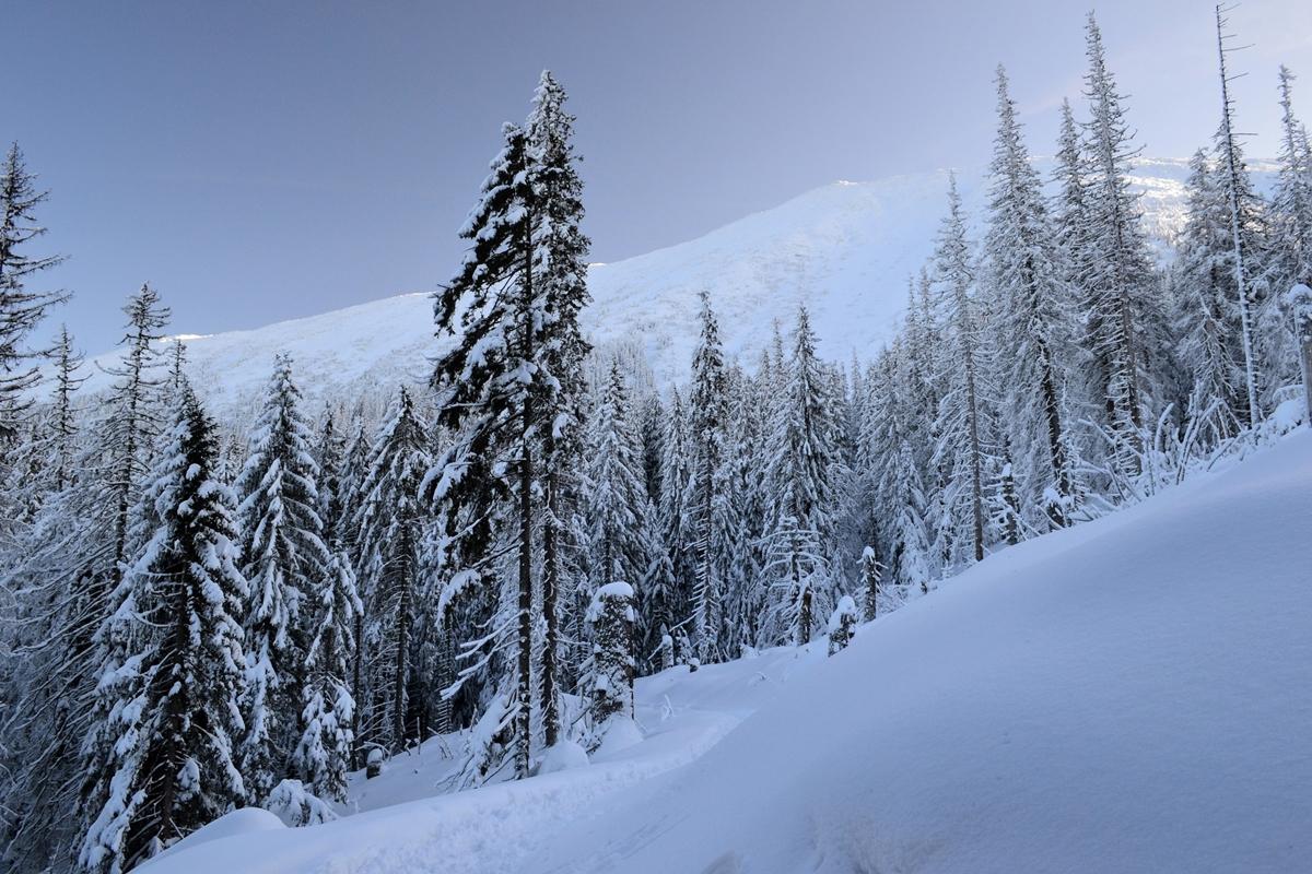 W zimie roślinność jest schowana głęboko podśniegiem